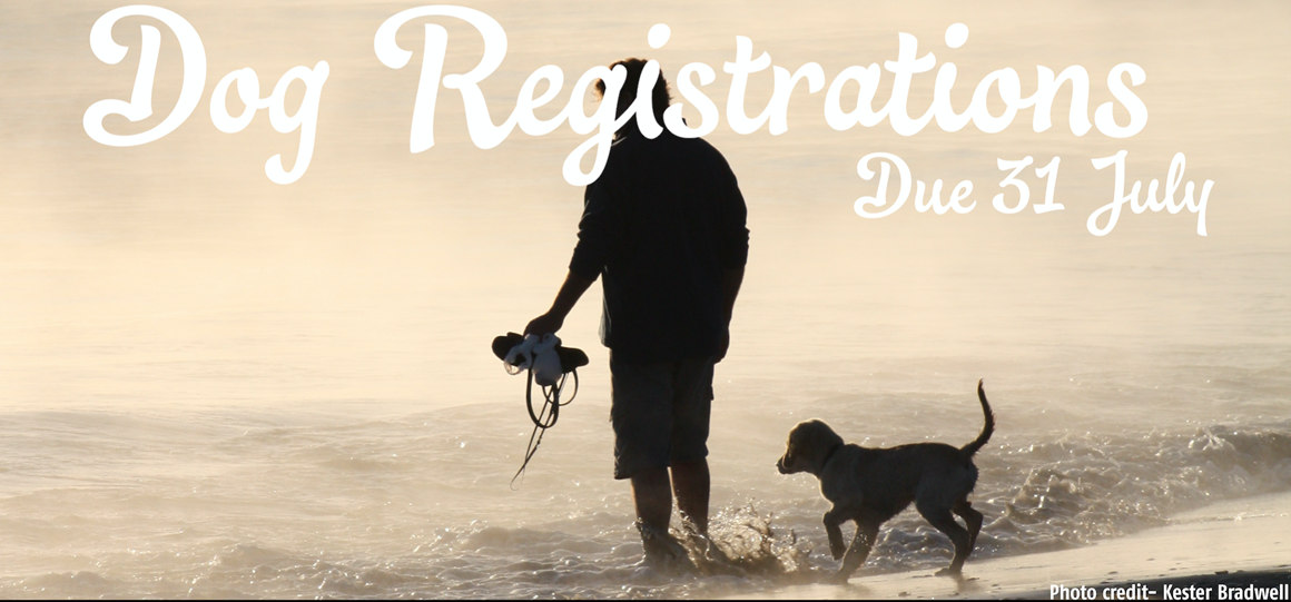 Dog Registration