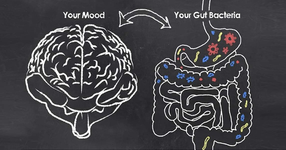 The gut brain connection - A focus on mental health