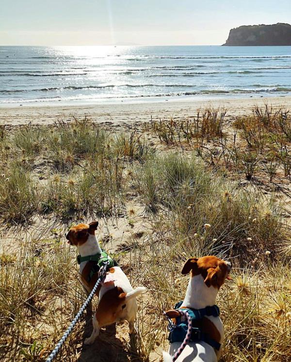 Photo Roseanna Davies, Dogs on the beach in Whangamata
